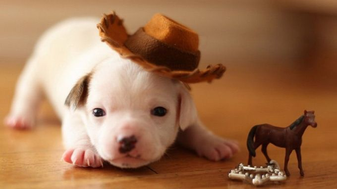 puppy in a cowboy hat
