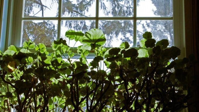 how to keep bugs out of indoor plants