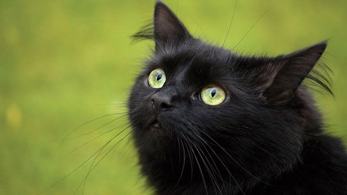 A cat can independently rotate its ears 180 degrees