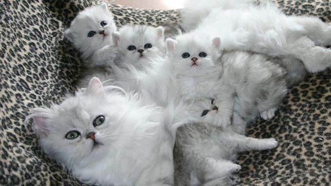 Most cats give birth to a litter of between one and nine kittens