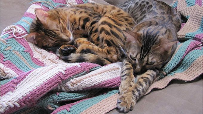 cats spend 23 of every day sleeping