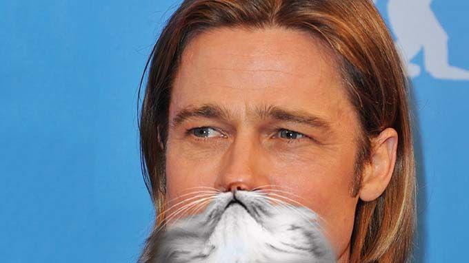 Cat 'Punny' Names Brad Kitt