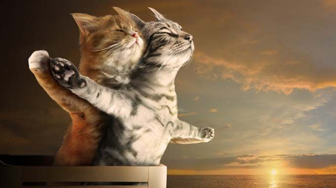 Cat 'Punny' Names Cat Winslet