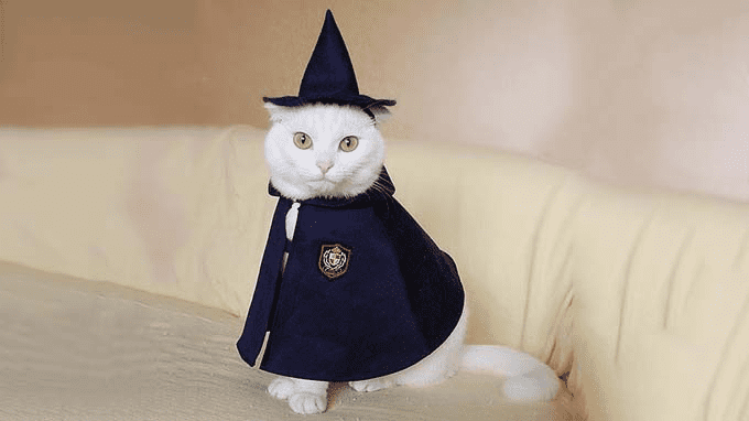 Cat 'Punny' Names Hairy Potter