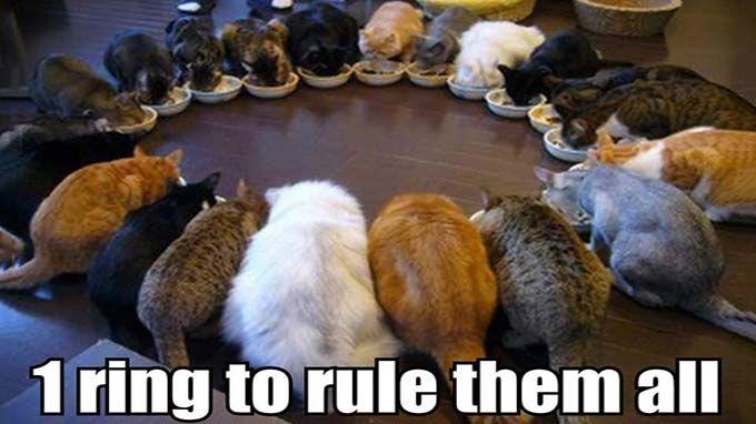 Cat 'Punny' Names J.R.R. Tollkitten