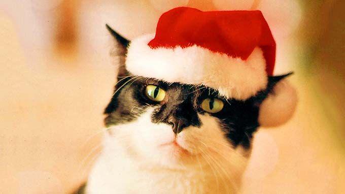 Cat 'Punny' Names Santa Claws