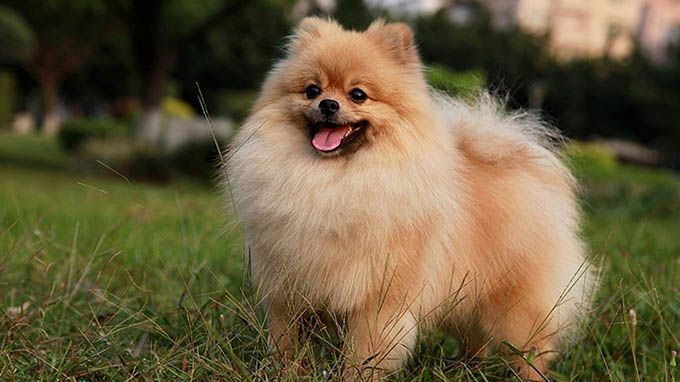 10 Really Cute Dogs | LifeDaily