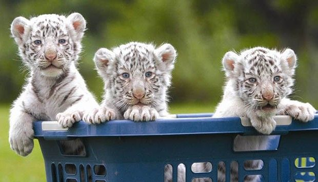 Which Is The Cutest Animal In The World? Our Top 10 ...