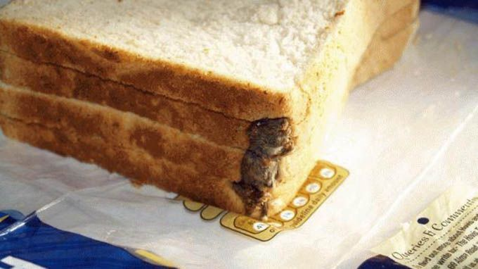 10 Utterly Disgusting Objects Found In Food | LifeDaily