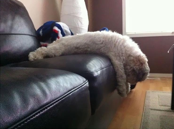 Lazy dog on a sofa