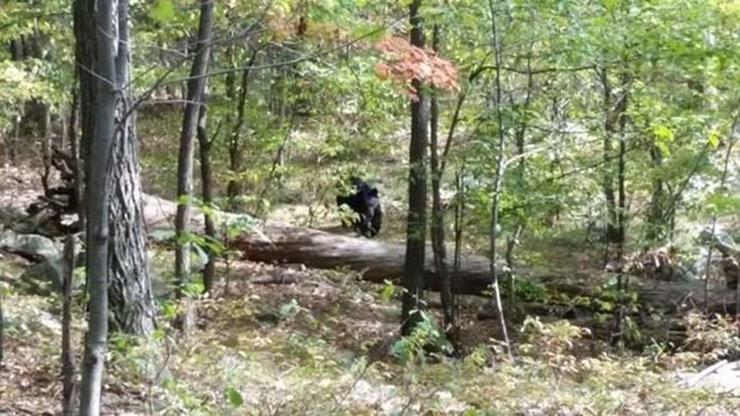Bear Killing Hiker