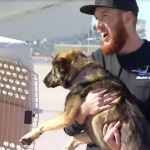 U.S. Navy Miraculously Finds Puppy After Being Lost At Sea For Over A Month