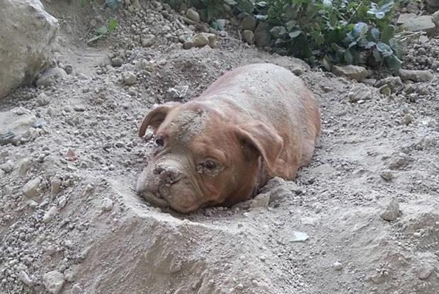 Buried Dog