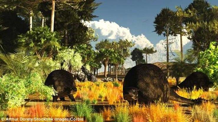 Farmer Finds Glyptodon Fossil