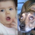 Beloved Dog Wakes Parents With Strange Behavior; Then, They Check On The Baby