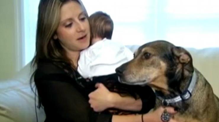 Rescue Dog Wakes Parents
