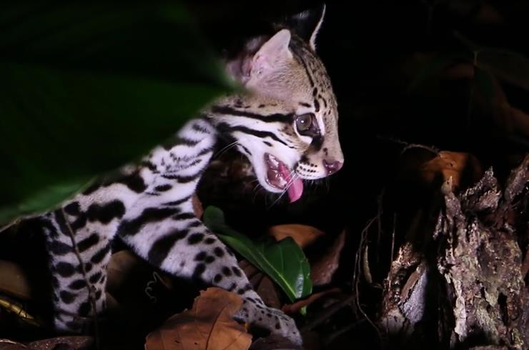Vicious Predator Pounces