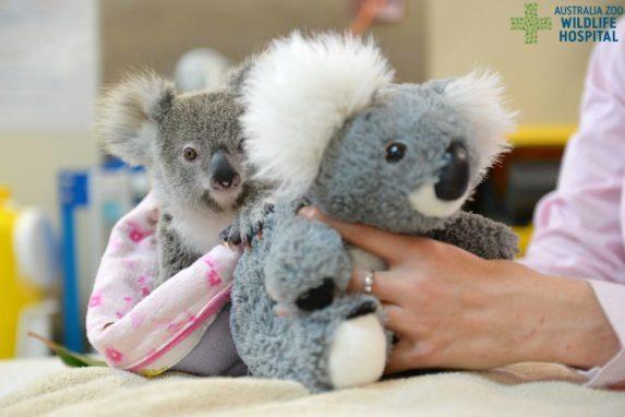 [Australia Zoo Wildlife Warriors]