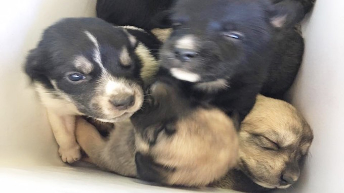 Photo by Hunt County Pets Alive