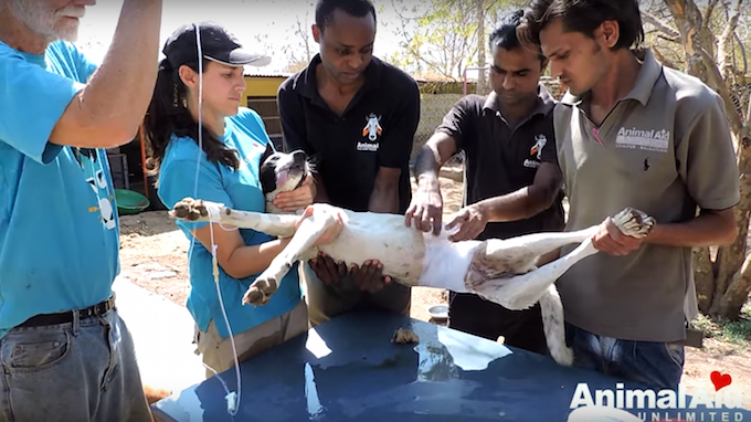 Credit: Youtube- Animal Aid Unlimited, India