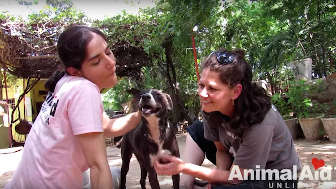 Credit: Animal Aid Unlimited, India- YouTube