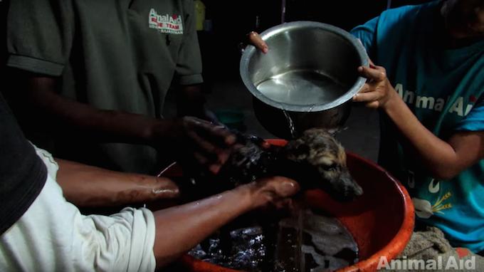Credit: Animal Aid Unlimited, India