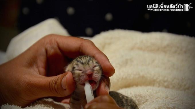 Photo by Wildlife Friends Foundation Thailand