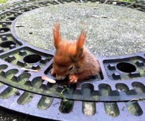 _92888356_squirreldpa