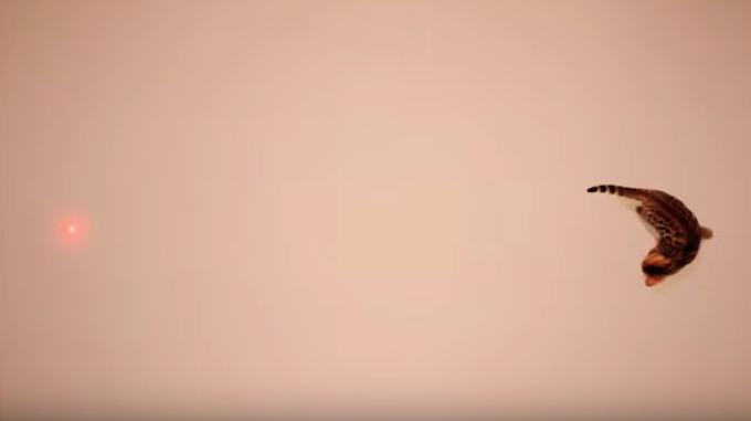 [NOBODY BEATS THE DRUM via Youtube]