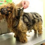 German Animal Rescue Save 56 Pets From Extremely Abusive Home
