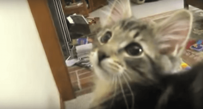 [Crazy Cats via Youtube]