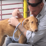 Marine Reunites With The Puppy He Rescued In Afghanistan