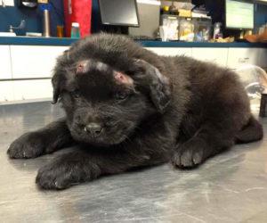 Photo by Facebook/Ebenezer Animal Hospital