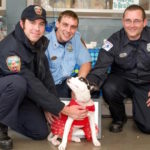 Puppy Is Reunited With The Heroes Who Brought Her Back To Life