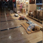 Istanbul Mall Opens Its Doors To Homeless Dogs During A Snowstorm