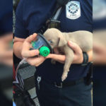 Firefighters Rescue Gorgeous Blue-Eyed Puppy From Devastating Blaze