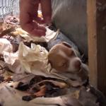 Homeless Mom Gives Birth To Three Puppies On A College Campus