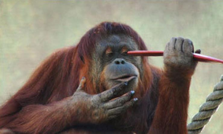 These Outrageous Orangutans Outsmarted Their Zoo Keepers