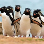 20 Animals Who Are About To Drop The Hottest Albums Of The Year