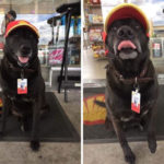 Dog Dumped At Gas Station By Evil Owners Is Now Their Most Popular Employee
