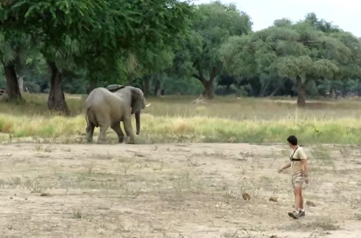 Wounded Elephant Story