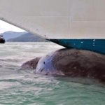 Sailor Jumps 40 Feet Off Boat To Save Trapped Whale