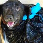 Family Abandons Elderly Dog At A Shelter In A Trash Bag