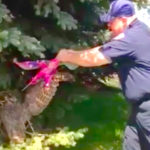 Firefighter Frees Owl That Was Found Tangled In A Kite