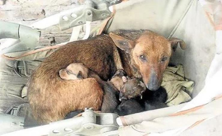 Hungry Stray Dog Protects Newborn Baby He Rescued From