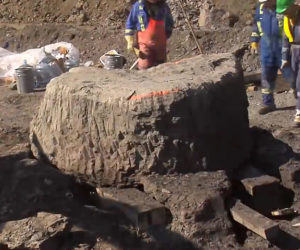 Ankylosaurus Fossil Discovery
