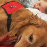 Doctors Left Speechless When They Introduce Dog To A Lifeless Boy…