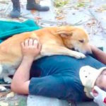 Dog Refuses To Leave Owner's Side While Waiting For Help
