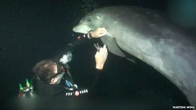 Lumba-lumba ini mendekat untuk mencari bantuan