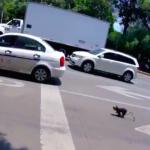 Cyclist Saves Scared Dog Darting Through Traffic
